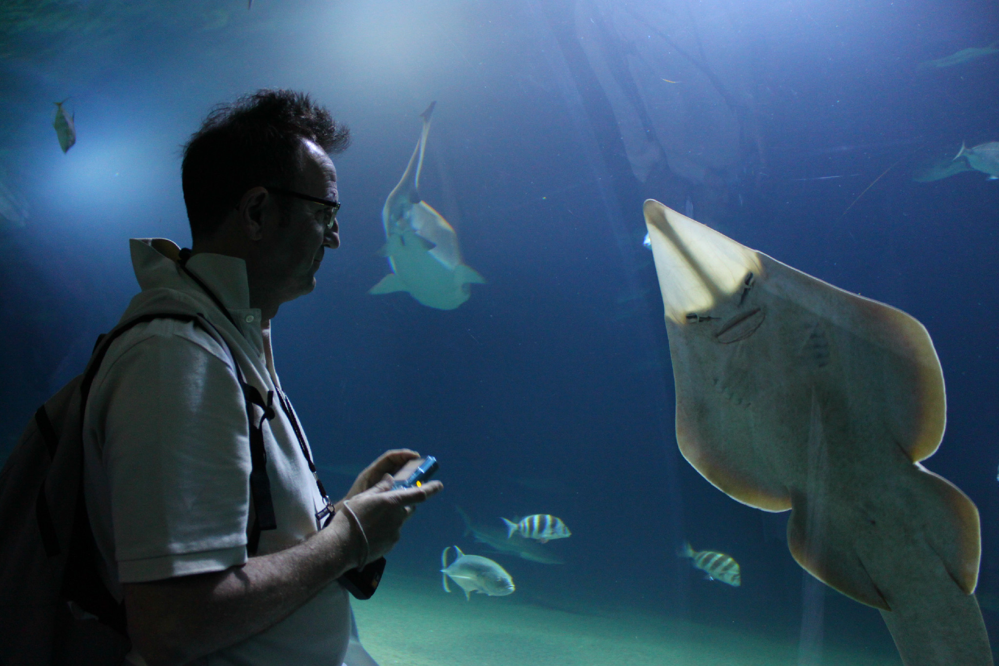 capture the colour contest - blue - manta ray whit my dad in valencia spain