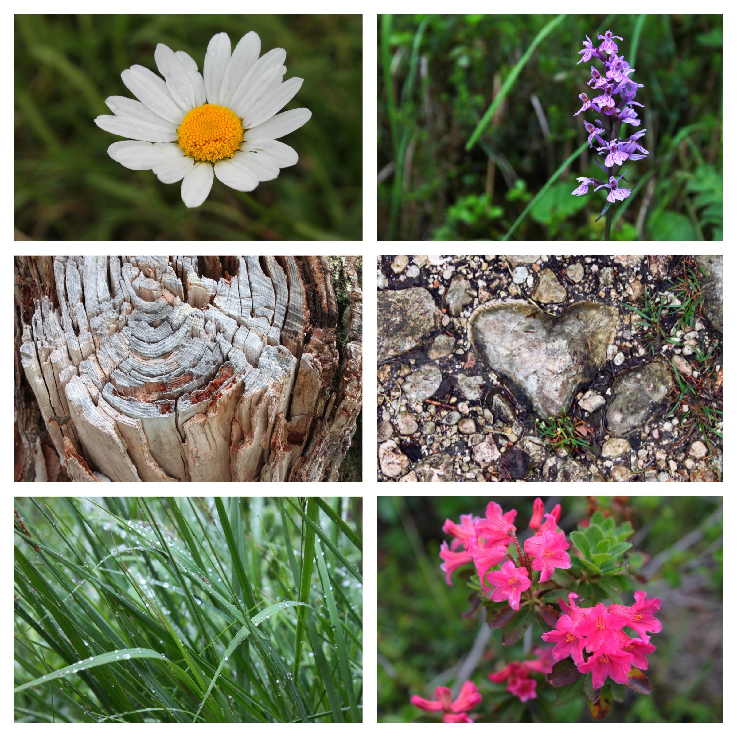 fiori cortina d'ampezzo hiking trip
